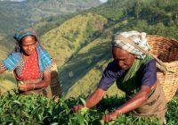 itinerary_lg_2Sri-Lanka-Tea-Plantation-Local-Women