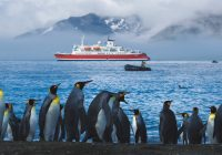 Antarctica Expedition South Georgia Penguins Shore-Leo Tamburri 2010-IMGP6344 Lg RGB