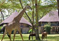 Kenya Lake-Naivasha-Sopa-Resort