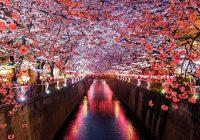 blossom Japan unsplash