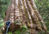 Bib trek tree