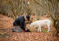 Truffle hunt 3 (002)